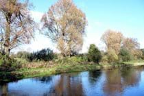 River Test - ideal for fly fishing