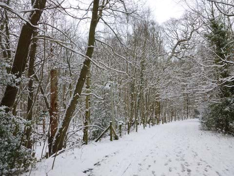 Ottershaw Park in winter