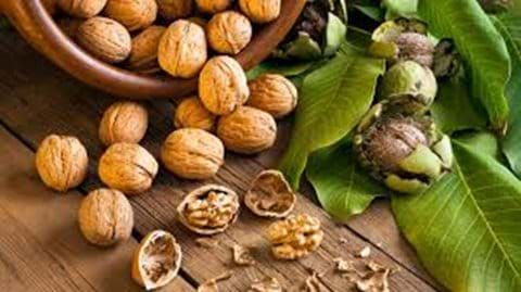 Walnuts are crucial to the economy of the area