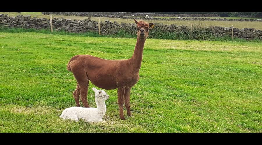 Jubilee and her baby Laurie born June 2021