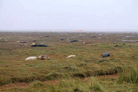 thousands of seals pupping season many within feet away!
