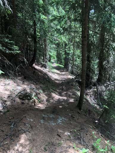 La Plagne Forest Trails