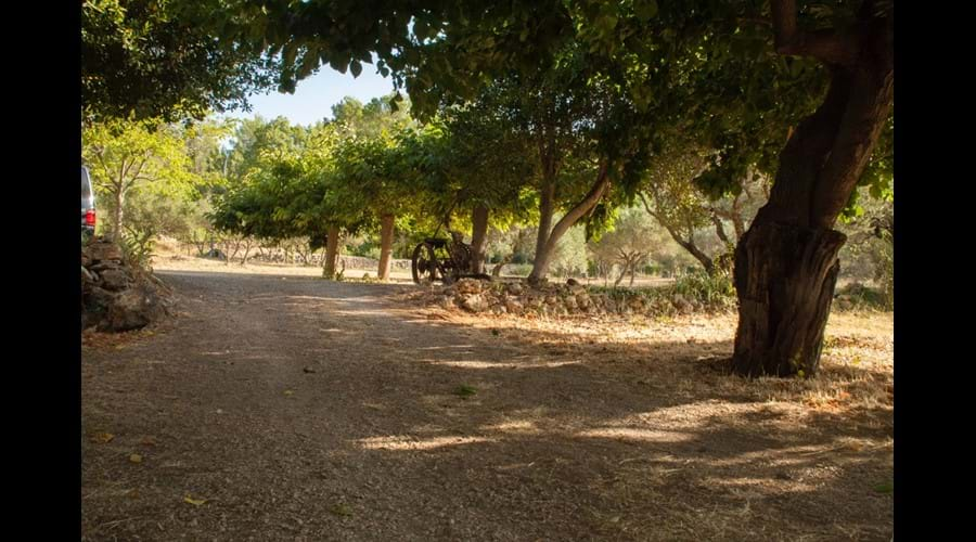 Looking up past the house towards the Olive Grove
