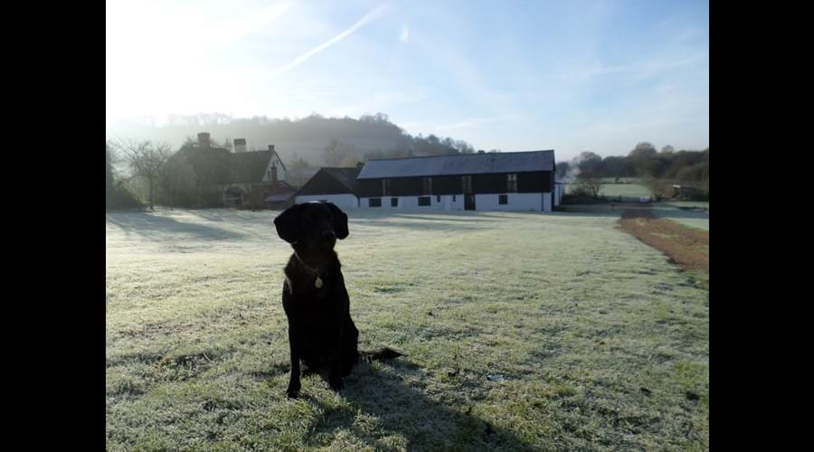 Dogs welcome at The Old Barns