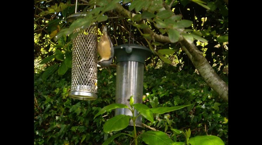 Nuthatch - a regular visitor