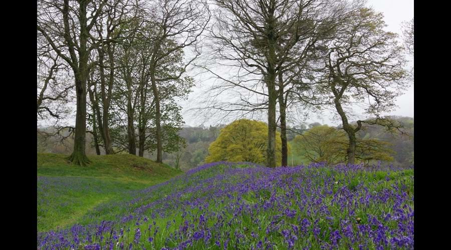 Bluebells in May at Blackberry camp iron age fort
