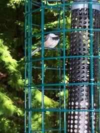 Watch birds visit the bird feeders