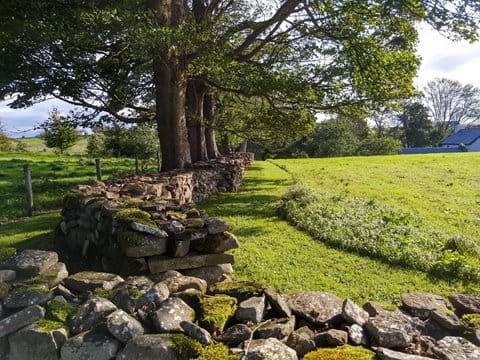 Dry stone walls, mature trees and its all yours.
