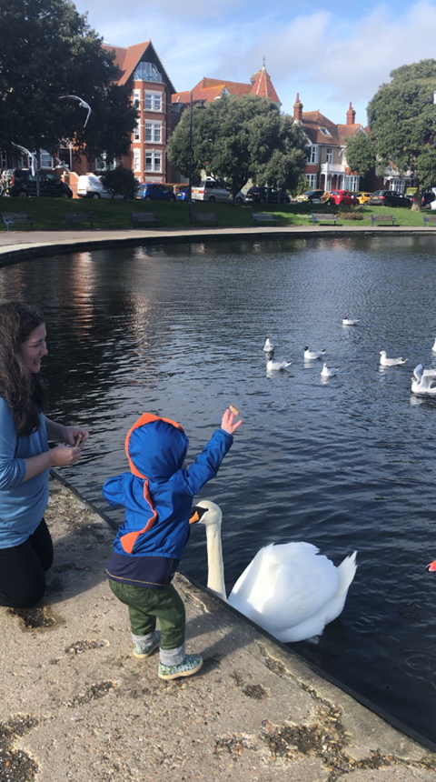 Feeding the swans at Canoe Lake