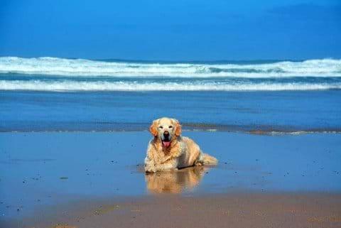 Dog friendly beaches 10 mins drive away