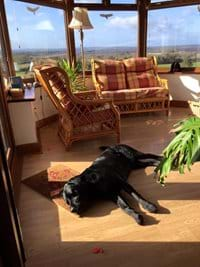 One of our four-legged guests relaxing in the conservatory !