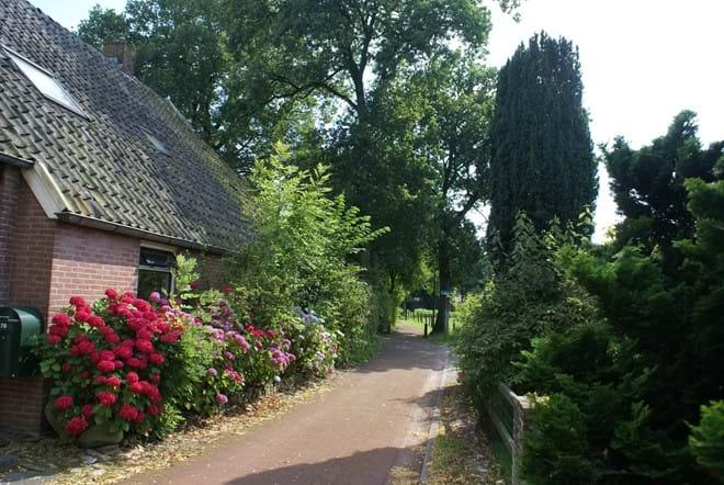 'Under the Oaks' in Summer