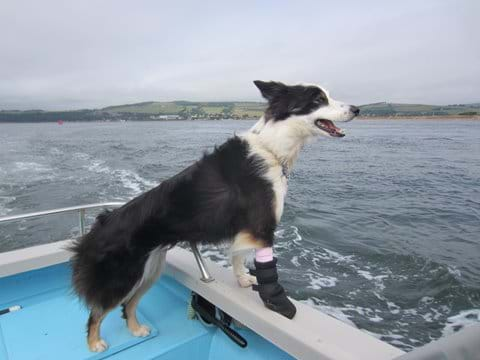Some boat trip operators allow dogs on board.