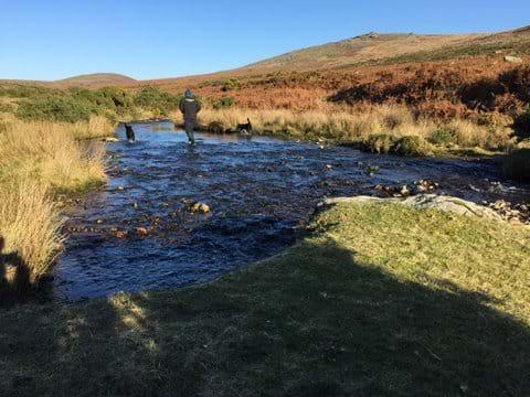 Walking the dogs on Dartmoor
