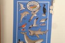 Coastal Wildlife of the Isle of Man