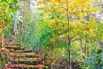 Autumn Woodland Paths