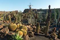 Finca Botanico, Guatiza, Lanzarote