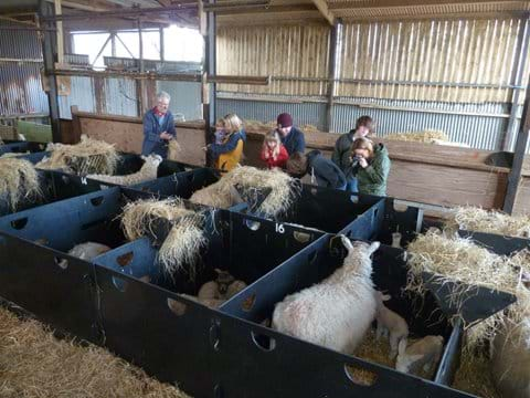 """Always lots of interest in our """"lambing live"""" sessions in March"""