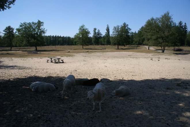 Ideale picknick plaats