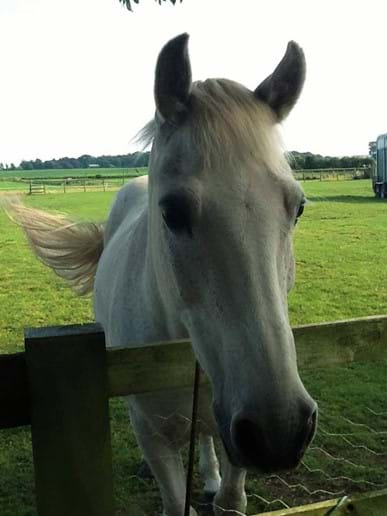 One of the residents of the paddocks - Charlie Pony