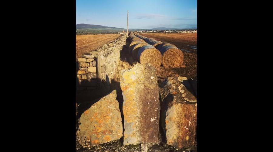 Sunlit hay bales on a walk from Scarlett point, Castletown