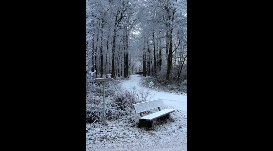 Frozen Forest Walks  !