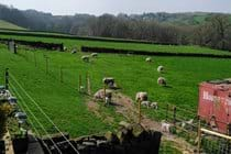 Sheep in the fields in front of Old Hay Barn
