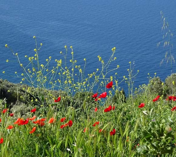 April 2015 - Sometime in the next few weeks this hillside will require a haircut, but hopefully we can leave it until after these poppies and dandelions have finished bringing us so much joy.