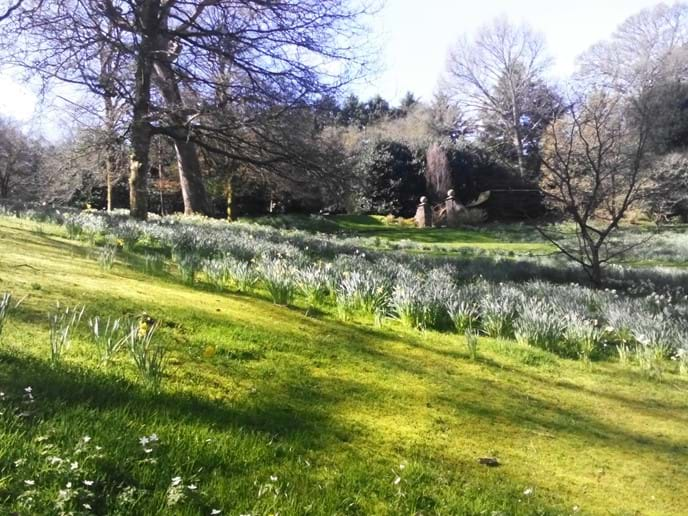 Dartington Hall gardens