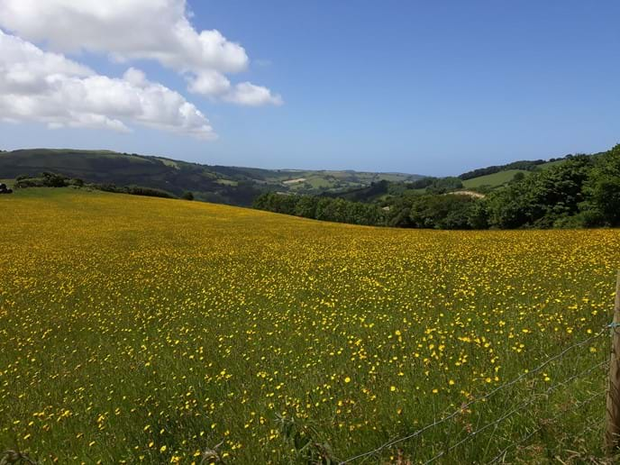 Stunning view down towards the coast across a wild flower meadow at the top of the drive