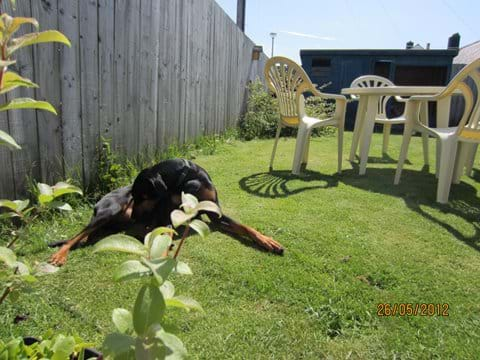 the fenced garden gives peace of mind for dog owners
