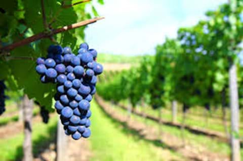 Nouvelle-Aquitaine is a major wine producing area