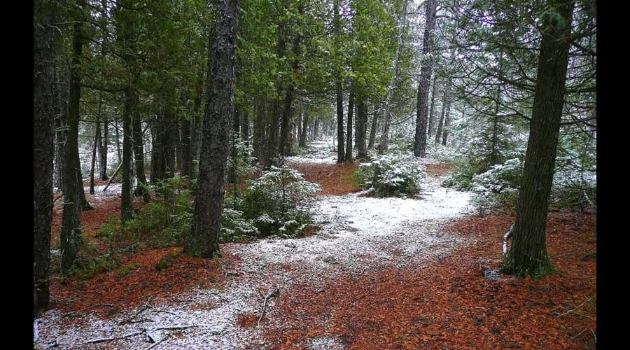 It can be fun to go for a hike in the woods anytime of year. This picture was taken during the changing season between fall and winter.