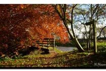 Autumn colour on riverside walk