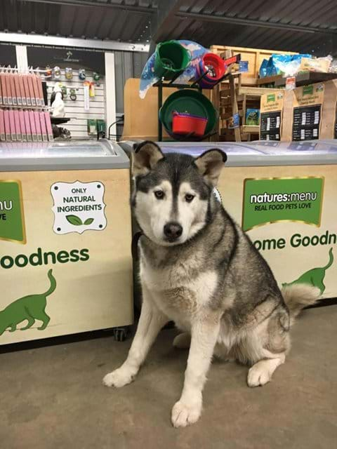You can meet this gorgeous dog at Scratby garden centre, where they sell a wide range of doggy items