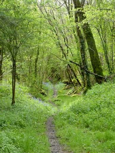 Dordogne Dog Walks