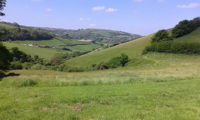 Our three acre field great for exercising your dog or just enjoying the abundance of wild flowers and wildlife