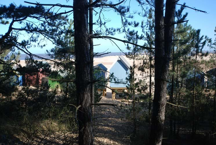 Beach Huts through the pine forest