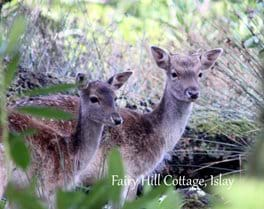 While staying at Fairy Hill Cottage you may have some visitors. Deer visit the cottage garden to munch on the lush, green grass.