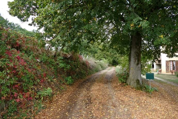 The lane behind the gite leading into the forest