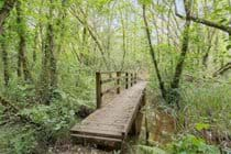 Boardwalks across wet woodland & reed bed