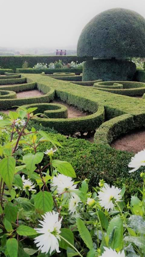 Sculptured gardens and white flowers at Chateau Hautefort
