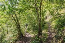 Woodland paths at Okel Tor Mine