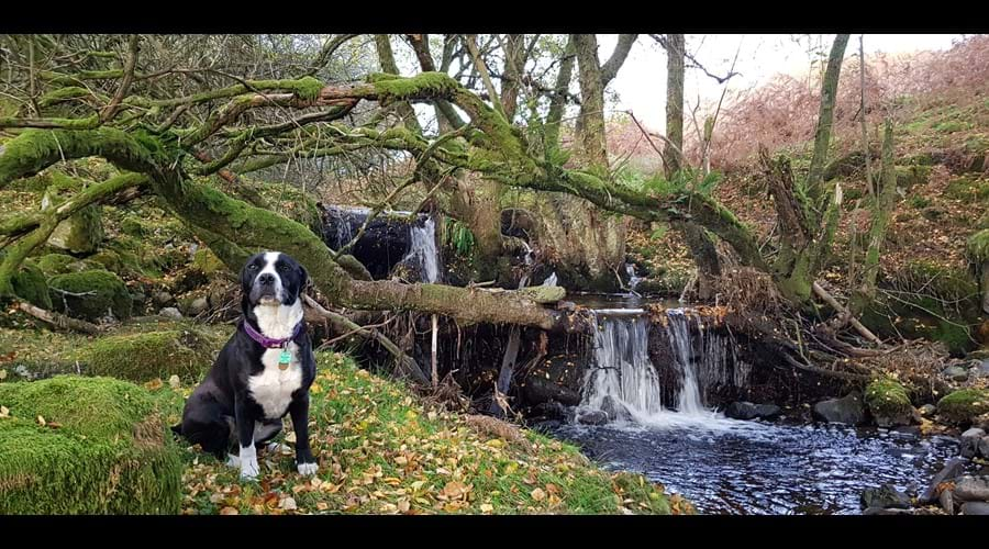 Cassie enjoying Nant Hafen waterfalls (a 5 minute walk from the cottage)