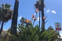 Beautiful Tropical gardens lead you to the beach