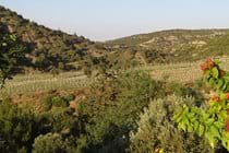 View of vineyards from the pool terrace