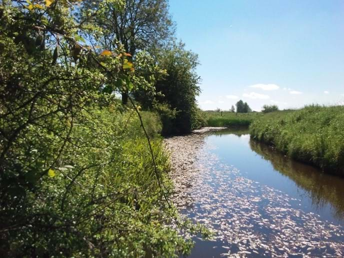 Stroll on  a path by the Owenmore river which meanders by the farm.