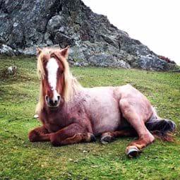 Wild Carneddau Pony Conwy Mountain