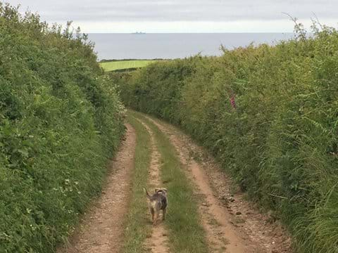 Miles of local footpaths