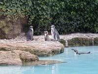 Enjoy the animals at Chessington World of Adventures